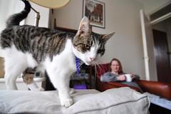 Dylan on the sofa (Mel Fields) Tags: cat tokina 1116 tokina1116mmf28 tokina1116