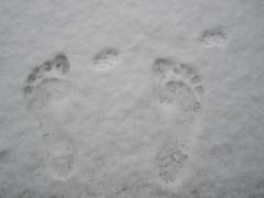 Mama & Oimo prints on snow