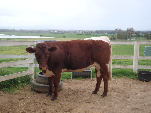 20091209-DSC04239-Australia-Farm