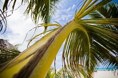Cozumel - 45 (itscodyxx) Tags: cruise carnival flowers trees sun beach shirt wonderful mexico cuisine emily palm hut rawr win cozumel cody wilco epic mahi pumice