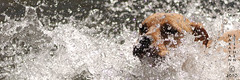 Water Dog by SteveNakatani, on Flickr