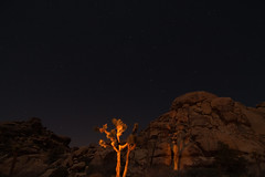 Night Painiting Joshua Tree and Big Dipper (GMills31) Tags: park nightphotography red night stars landscape rocks joshuatree joshuatreenationalpark thebigdipper nightpainting natioinalpark monzogranite mountainhighworkshops