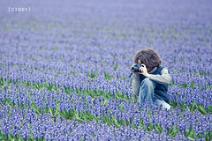sea of hyacints... ({cindy}) Tags: camera flowers blue holland green field canon photography purple explore hyacinths
