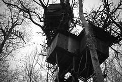Palombière (Jæn) Tags: blackandwhite forest pentax forêt jaon noretblanc k10d palombière bénéjacq