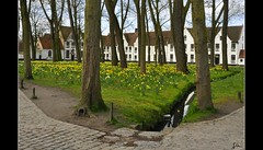 Brugge die Schone ... (*Lie ... on a short break ... !) Tags: nikon belgium brugge westvlaanderen lie bruges bguinage daffodils narcissen begijnhof beguinage d90 nogroupinvitationsplease noglitteryawards bruggedieschone