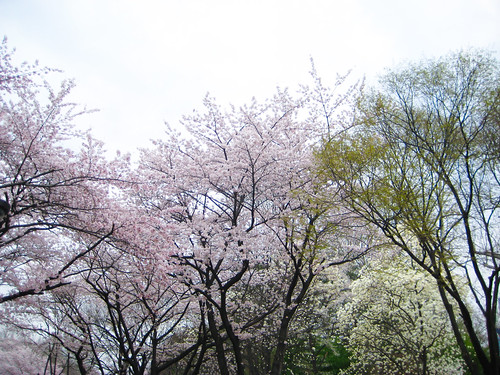 Cherry Blossoms, Art, & the Flea Market
