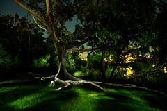 wish (mark silva) Tags: lightpainting nocturnal sydney australia nsw paintingwithlight nocturne ballsheadpoint dwcfflightpaint