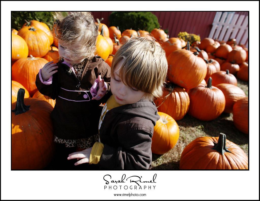 pumpkins 35