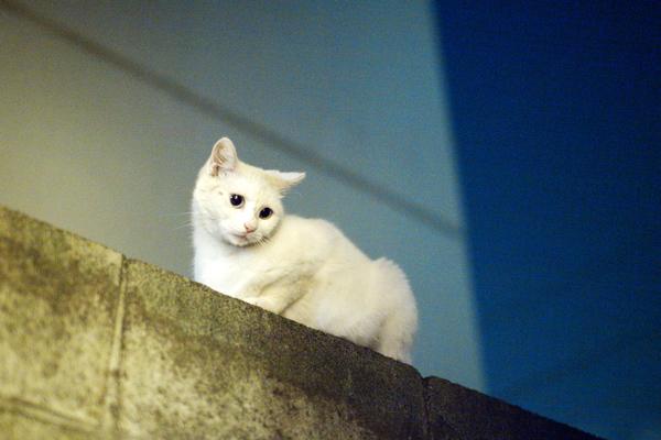 Odd eye Cat 7