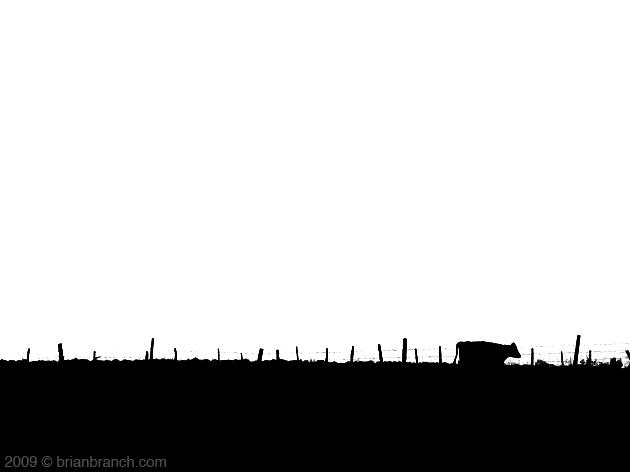 P1060104_cow