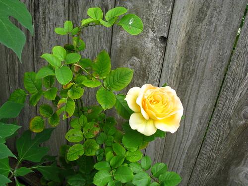 'Honey Bouquet'