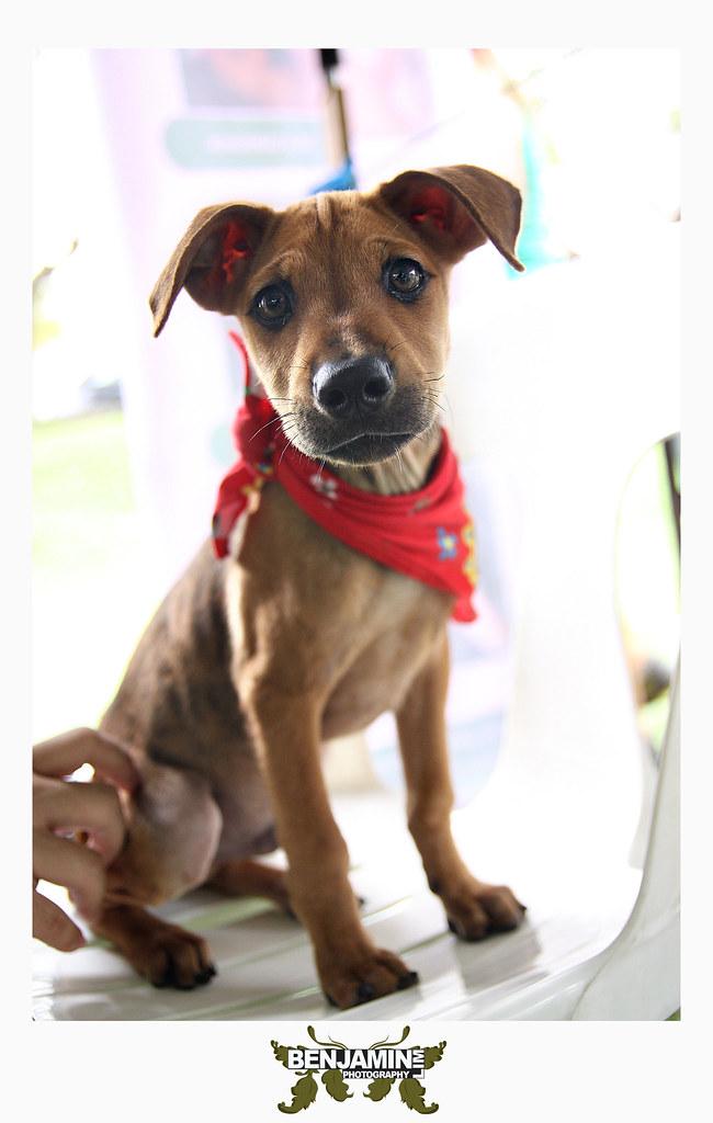 dog_adopt1