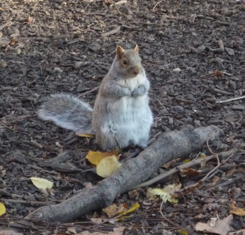 Well Grounded Squirrel