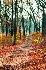 A Peaceful Morning Stroll....