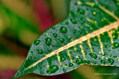 AFTER THE RAIN (Marquisa -) Tags: red green rain yellow leaf interestingness focus texas dof bokeh houston drop explore frontpage svetlana marquisa explored explorefrontpage rainn explorefp svetlanavasiliadi russiantexas svetanphotography explorednov2820093 svetalanavasiliadi