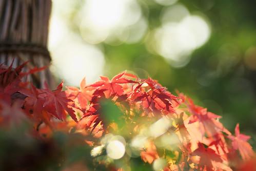 午後の紅葉