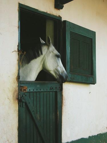 animals equino horse barn fazenda
