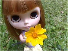 I have a flower for you!