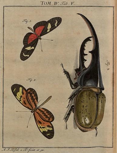 Helicoma spp + beetle V4