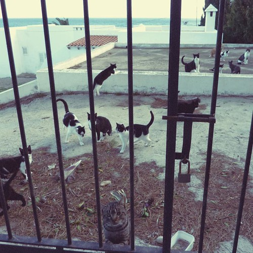 The Cats of Mojacar Playa