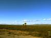 Palmas del desierto