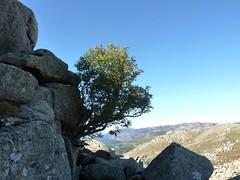Arrivée sous le sommet de Punta di A Bambiola : sorbier des oiseleurs
