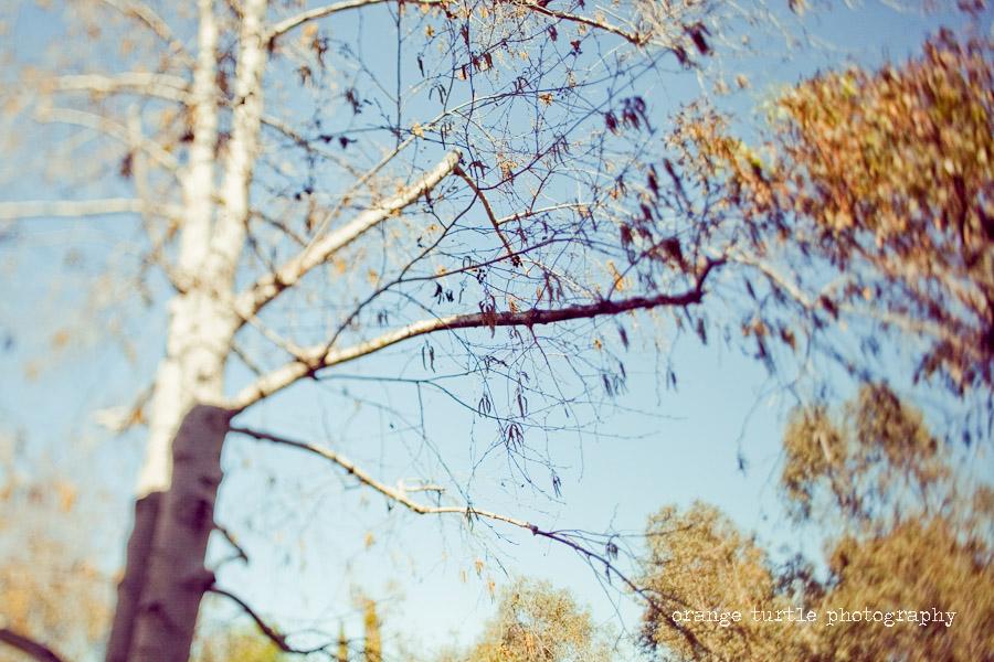 ts-trees-101