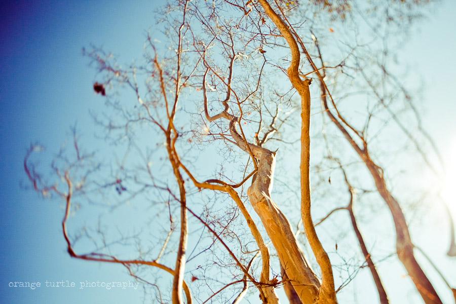 ts-trees-104