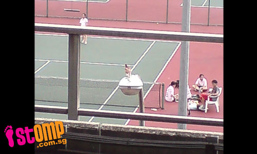 Sporty bird gets bird's eye view of YOG's tennis game