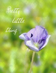 (lisaluvz) Tags: light macro green nature grass sunshine wales garden purple heart bokeh text tiny wildflower picnik speedwell bej lisaluvz