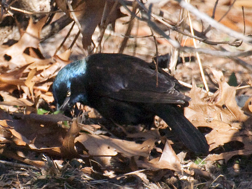 gracklegotit
