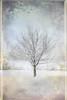 ..|.. (littlelakey) Tags: lake snow columbia febuary 430am columbialake treeinthesnow