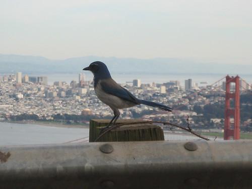 bluebird standing. . .