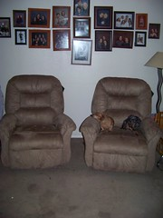 pup chairs (bergmanstuff) Tags: fight still chair over got they them but pup each