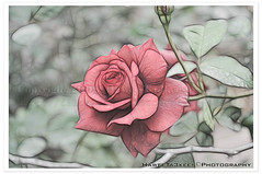 Color Pencil,,    ({ahradwani.com} Hawee Ta3kees- ) Tags: flowers photoshop close ali hassan doha qatar   d90     nikond90   hawee  mygearandme haweeta3kees  mygearandmepremium  ta3kees mygearandmebronze mygearandmesilver ahradwanicom ahradwani