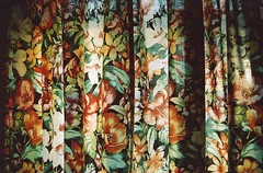 bathroom curtains (Adele M. Reed) Tags: light floral 35mm bathroom kodak 200 curtains pentaxp30