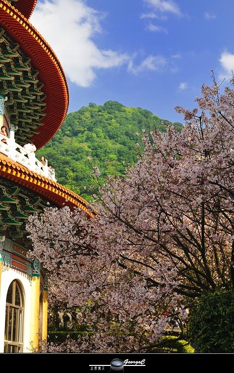 Sakura sunny 19