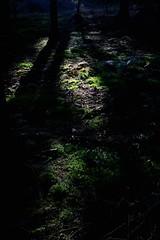 Waldboden (seeker0204) Tags: trees nature forest moss shadows natur grn sonne wald bume schatten schwarz moos seeker0204