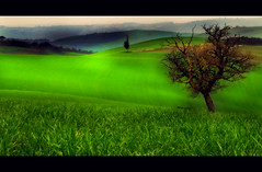 Spot light (David Butali) Tags: italy green nature grass rural canon landscape countryside italia view country campagna erba tuscany siena pienza toscana valdorcia paesaggi 18200 landascape asciano 500d mywinners saariysqualitypictures dylan66