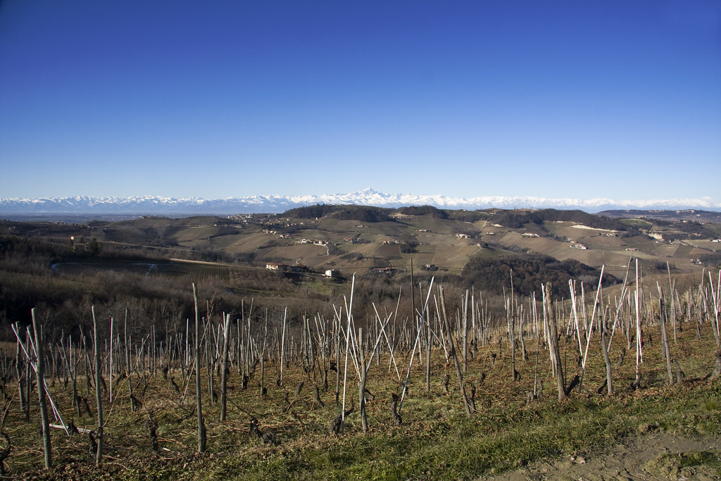 Vineyards, Hills & Alps (by storvandre)