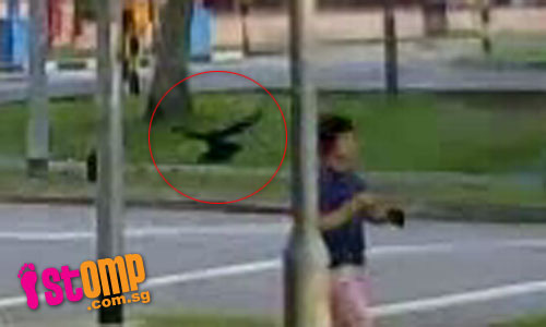 What's going on? Crows attack passersby at Choa Chu Kang