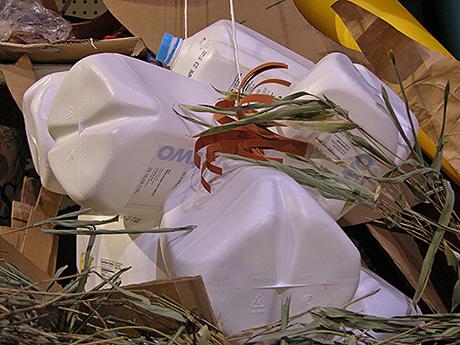 milk carton and plant stock