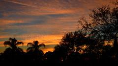 Sunset February 17th (Jim Mullhaupt) Tags: sunset sundown dusk sun evening endofday sky clouds color red gold orange pink yellow blue tree palm outdoor silhouette weather tropical exotic wallpaper landscape nikon coolpix p900 bradenton florida manateecounty jimmullhaupt cloudsstormssunsetssunrises