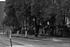 Ontario Saint-Christophe Saint-André (Denis Hébert) Tags: denishébert anthropogeo centresud montreal montréal québec quebec canada été 2016 juillet july monochrome ngc newtopographer newtopographic noiretblanc nb bw blackandwhite blackwhite ville végétation city extérieur arbres steet shadow ombre urbain urban summer rue rueontario rueontariostreet trees trottoir sidewalk