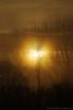 Tervuren.Belgium (Natali Antonovich) Tags: tervuren belgium nature landscape sun silhouette parallels
