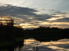 Sunrise in the mangroves.