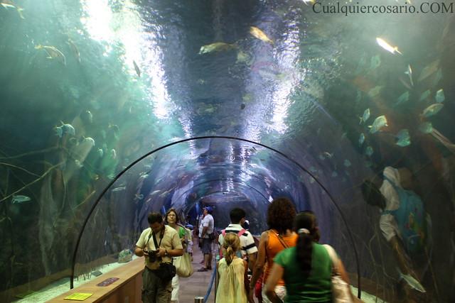Túnel acuático
