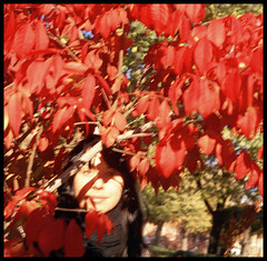 ROUGE (Andre Guerette) Tags: autumn red blur fall 120 tlr film leaves mediumformat rouge october montreal softfocus etsy littleitaly yashicamat fujipro400h autaut yashicamatm juliedeault hazelandhunter