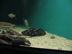 IMG_1760 (Joao Galdino) Tags: fish san francisco acquarium