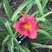 2009-07-29 Botanical Garden